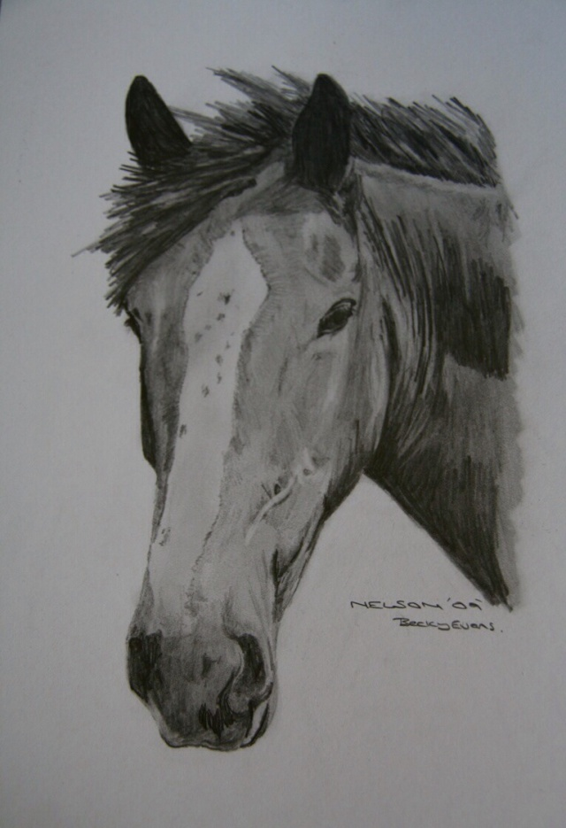 Nelson pencil drawing