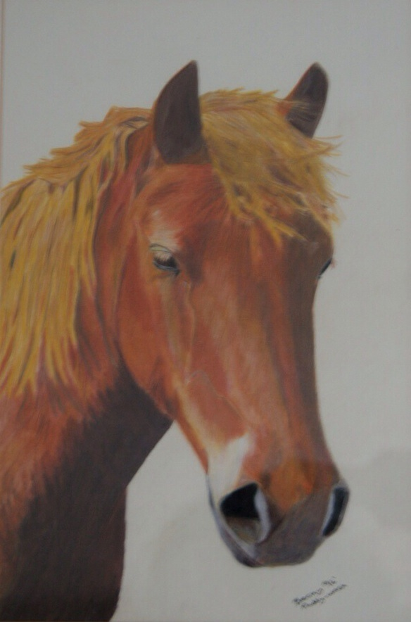 Paddy in coloured pencil