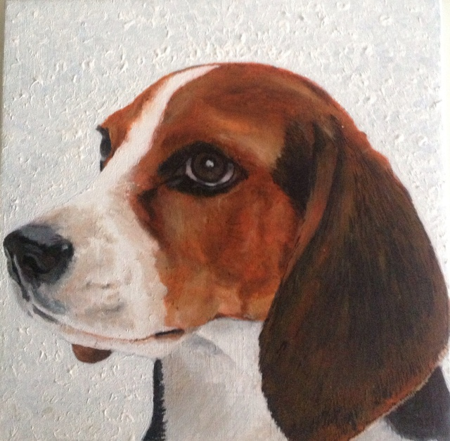 Beagle in acrylic
