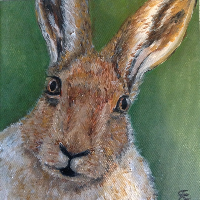 Hare stare oil paint