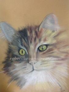 Pastel cat combination