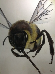 'Meet Belinda' Honey bee in flight Watercolour, neocolor and black fine liner