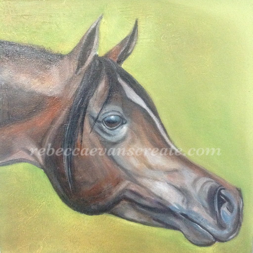 Arab horse head oil painting rebecca evans create art