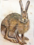Hare watercolour