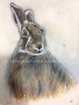 Watercolour and ink hare painting rebecca evans create art