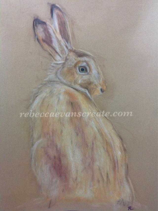 Hare in pastel rebecca evans create art