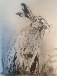 HARE AND READY willow charcoal on daler rowney pastel card