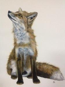 Foxy Loxy- the sky is falling down. Watercolour fox