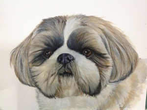 TILLY watercolour portrait shih tzu dog.