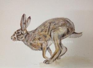 Watercolour hare 'Esme'