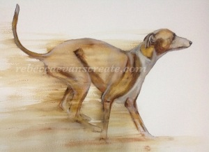 Watercolour greyhound 'sinbad'