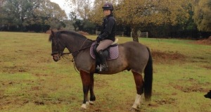 'Woody' new forest pony, clipped and ready for winter.