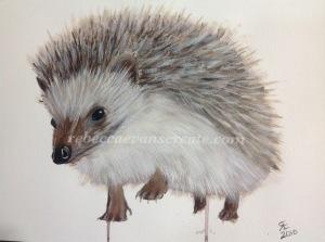 Hedgehog watercolour painting art