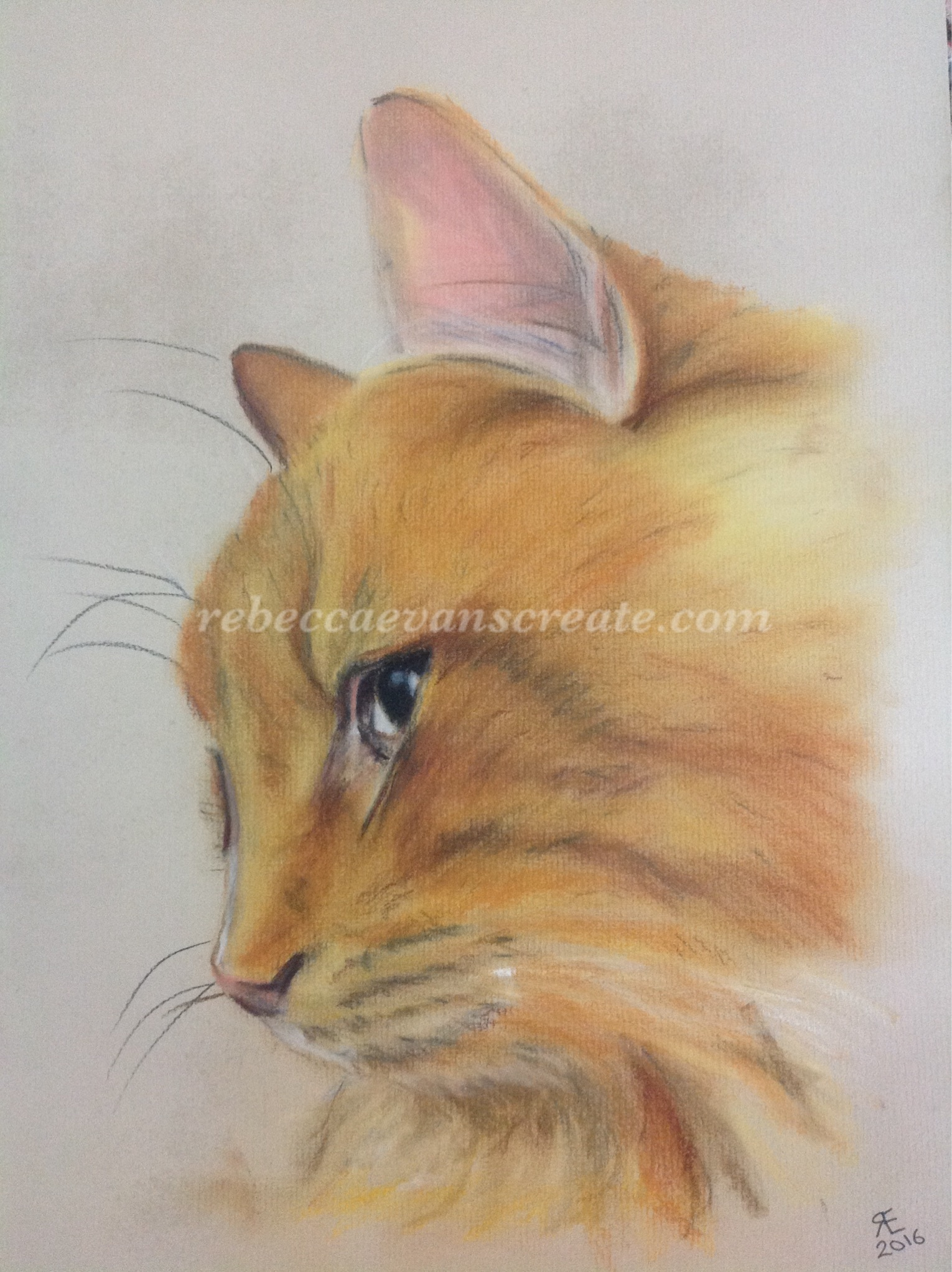 Pastel painting ginger cat rebecca evans create art