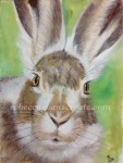 Watercolour hare