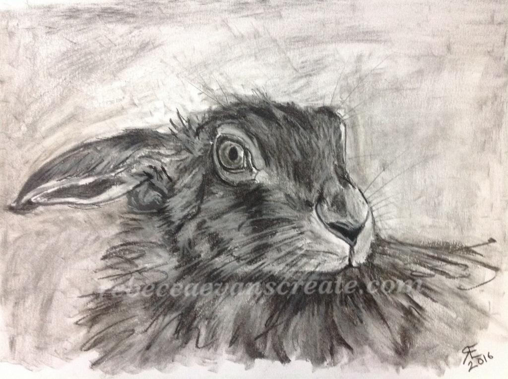 Charcoal hare rebecca evans create art