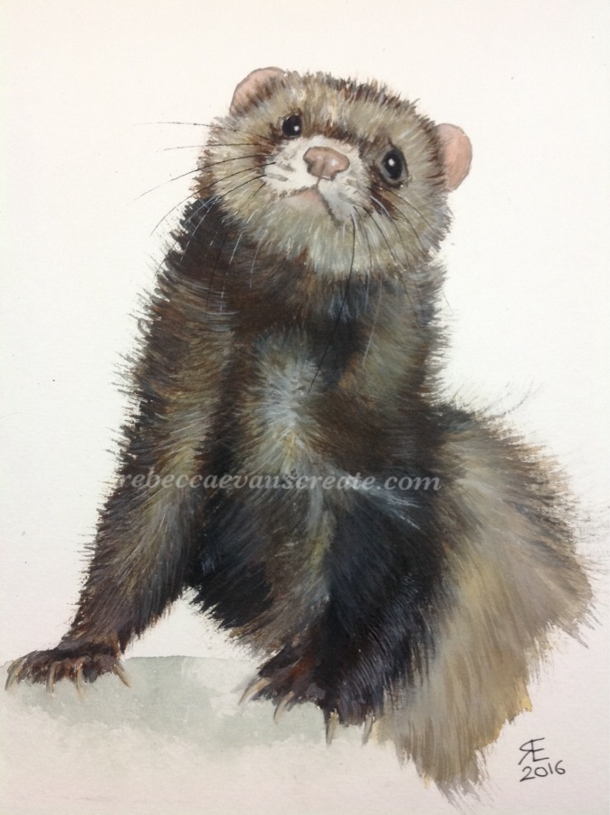 Ferret watercolour painting rebecca evans create art
