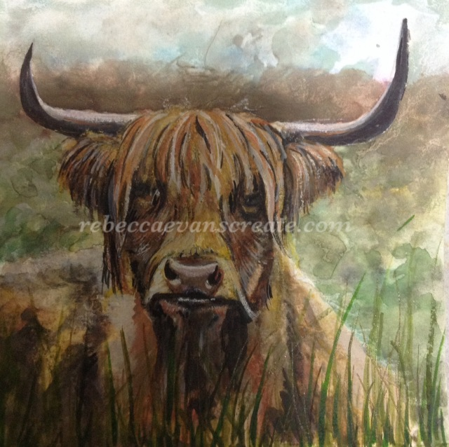 'Otis' new forest highland cow