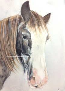 """'Billy' watercolour 140 lb coldpress 10x7"""" mounted onto A4 birthday card"""