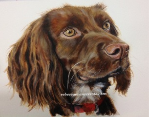 "'Coco' watercolour working cocker spaniel. 10x14"" 140 lb cold press"