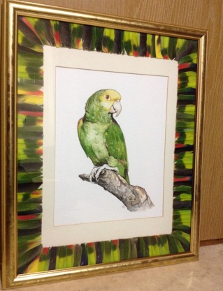 'In thought' parrot watercolour, 30x40 cm framed and mounted. Mount is covered in feathers from the parrot which were shed during his life time. This is a request from a patient at work, a memory of a special friend sadly missed