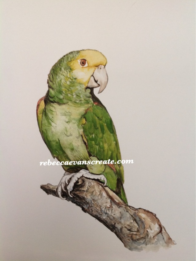 'In thought' memory of 'minnie'parrot watercolour, 30x40 cm framed and mounted. Mount is covered in feathers from the parrot which were shed during his life time. This is a request from a patient at work, a memory of a special friend sadly missed
