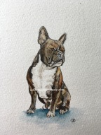 Ink and wash watercolour mini painting of French bull dog
