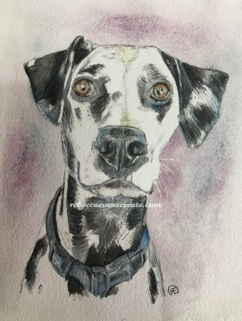 Ink and wash/watercolour sketch study of Dalmatian