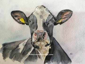 Ink and watercolour cow study