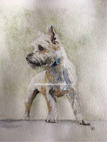 Westie ink and watercolour, study /sketch