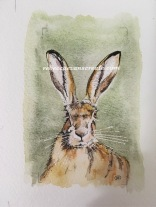 Watercolour hare, ink and wash