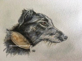 Ink and wash/watercolour study sketch of lurcher