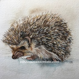 Ink and wash watercolour hedgehog